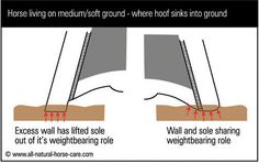 Diagram of a hoof weightbearing on soft ground - Learn about Barefoot Horse Hooves and Healthy Hooves here: hoof diagrams - http://www.all-natural-horse-care.com/barefoot-hoof-diagrams.html