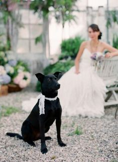 Wedding dog lace collar   photography by http://www.beauxartsphotographie.com/