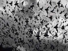 tim flach ~ fruit bats