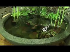 How to create a beautiful container water garden.