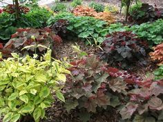 Heucheras are famous for their different foliage colors, and best of all, very hardy in the Madison area.