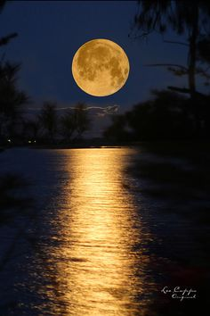 ✯ Warm Moon Rising