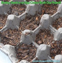 Starting Seeds in Egg Cartons {Earth Day Project} #earthday #garden