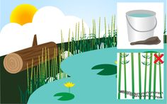 How to Attract Dragonflies to your yard.