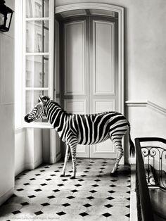 { black & white } my dream room!
