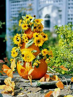 Pumpkin Stacker Sunflower Display:  Mask low, rounded glass vases by placing them in hollowed out pumpkins. Insert stems of sunflowers in the vases. Stack smaller pumpkins on top of larger ones for a tower of fall color.  Great on a buffet table for a fall dinner party!