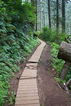 Cape Lookout Trail in Oregon