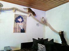 Indiana Jones traveling cat style! #cats