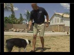 Dog Agility Training Basics : Teaching Dogs Agility Tricks - basic need and simple tips.