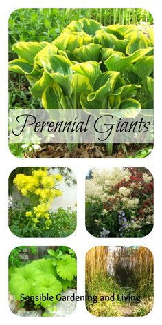 Perennial Giants with Sensible Gardening and Living