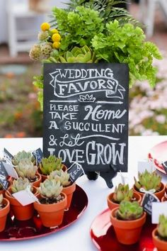Succulents make lovely wedding favors for guests!