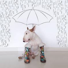Meet the Art World s Coolest New Muse (Spoiler: He s a Dog!)