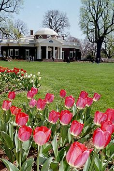 We're looking forward to Monticello in Spring!