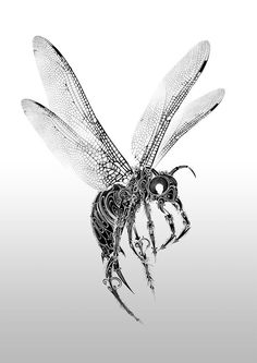 Gorgeous Pen and Ink Wildlife by Si ScottApril 25, 2013