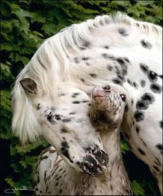 horse and her foal - - a mother's love