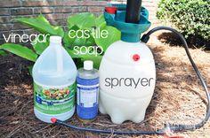 All Natural Weed Killer - Vinegar, Castile Soap and a Garden Sprayer