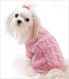 Maltese Dog Knitting Pattern : Pet Sweaters to Knit on Pinterest Dog Sweaters, Dog Sweater Pattern and Dog...