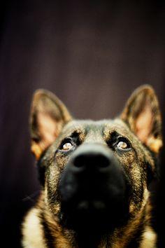 ¡Que vivan los perros! Esa mirada...