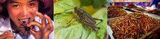 """Le Forum des Entomovores""  Parlons insectes comestibles  ;o) ;   ""The Entomovores Forum""  Let's talk about edible bugs & entomophagy  :o)"