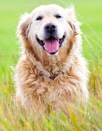 9 Things Your #Dog Is Trying to Tell You | via @Mary Sapio's Day #pets