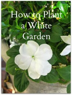Learn how to plant a serene white garden