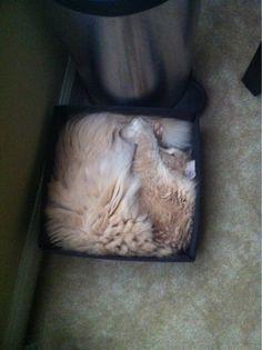 A square cat? ..