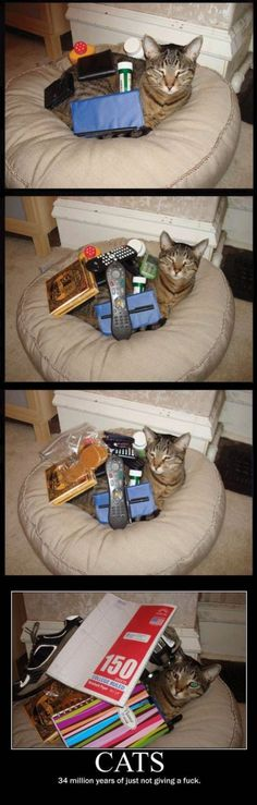 cats just dont give