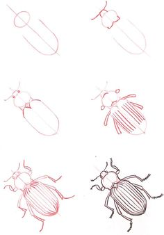 animal drawings, how to draw insects, beetle drawing, learn, bug, draw anim, insect howtodraw, anim insect, insect drawing