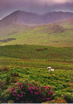 Connemara, Ireland by marja2006-offers on Flickr. http://www.lonelyplanet.com/ireland/county-galway/connemara