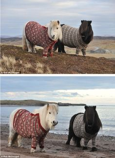 The person who knit these mini-horses a sweater... | 35 People You Wish You Could Trade Places With For ADay