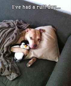I had a ruff day…