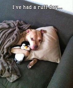 dog pics, anim, funny dogs, cuddle buddy, funny pictures, funni, penguin, snuggl, puppi