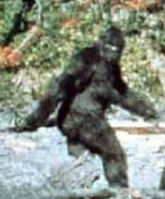 The Patterson Bigfoot, filmed in CA (female).