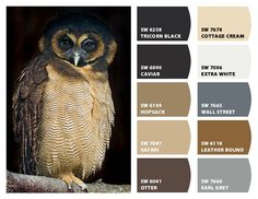 Owl Inspiration Color Palette Chip It! by Sherwin-Williams – ChipCard by Christy C.