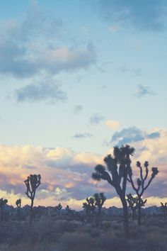 Sunset - Joshua tree