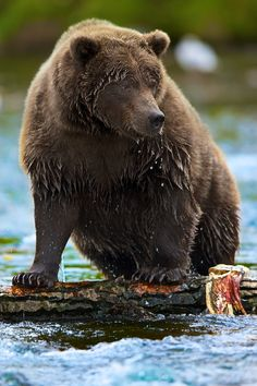 Photo Bear's In Anchorage by Buck Shreck on 500px