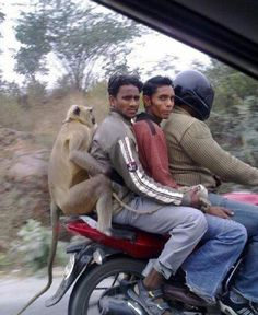 Hitching a ride! Only in #India!