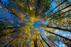 Bosques. Foto José Díaz. #photo #nature #Asturias #Spain #sky