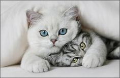 cat photography, kitty cats, kitten, animal funnies, funny cats, pet, green eyes, dog, friend