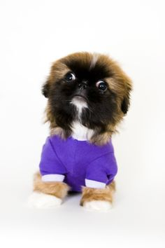 #AmericanApparel Dog Accessories at http://shopaa.org/HKm86n