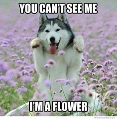 field, funny animals, funny dogs, pet, flower power