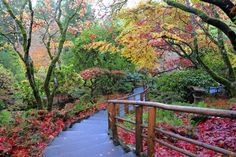 The walkway to the Japanese Gardens at the Butchart Gardens is magical in October! #VictoriaBoo