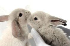 bunnies rabbit, a kiss, pet, baby bunnies, baby animals, animal babies, easter bunny, friend, kisses