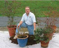 Instructions on planting Blueberries in Containers from Dave Wilson Nursery