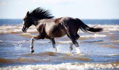 Ride a horse on a beach