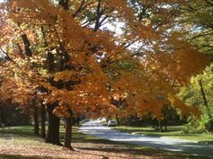 Fall in quincy Illinois