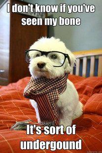Hipster Dog - Quickmeme