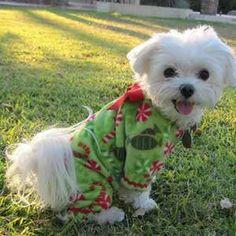 Happy!! Merry Christmas Puppy!