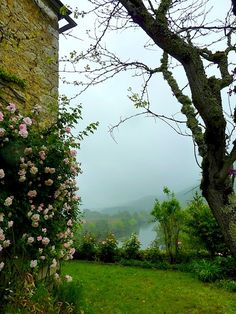 Rose Garden, Dordogne, France  photo via petra