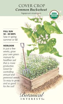$2.99 30-40 days. So easy to grow your own green manure for healthier, more productive soil. HEIRLOOM.